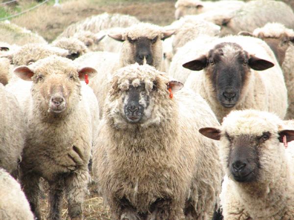 herd1.jpg