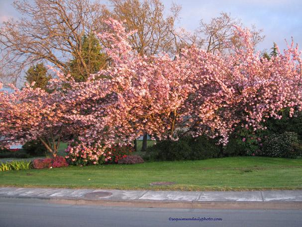 pptrees4.jpg