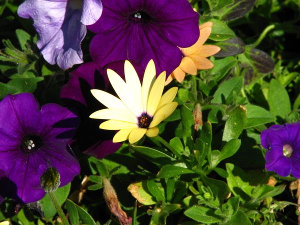 flowerrs5.JPG