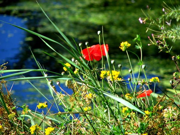 flowersweeds1.JPG