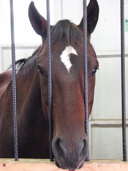 horse3.JPG