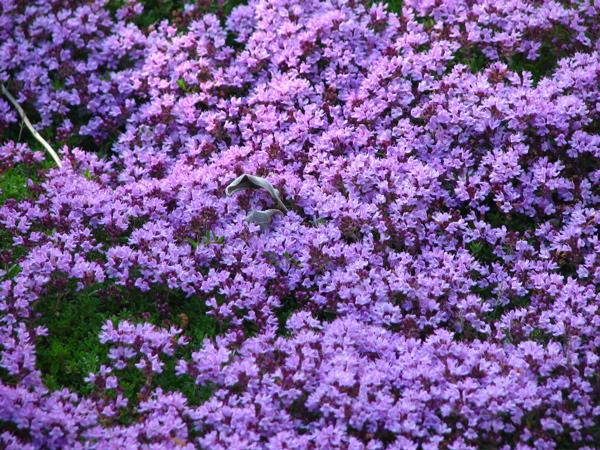 purplet.jpg