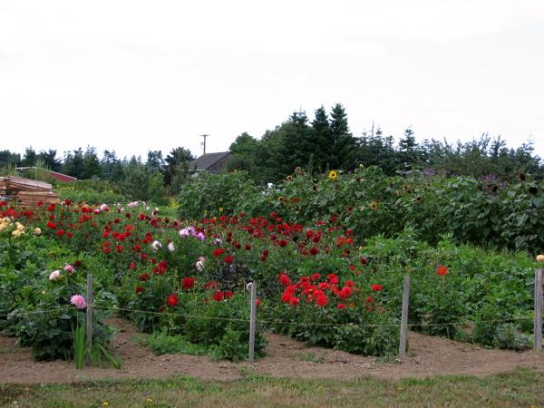 andreas-garden.jpg