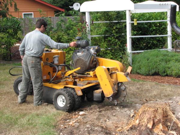 stump-grinder.jpg