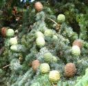 pinecones1.jpg