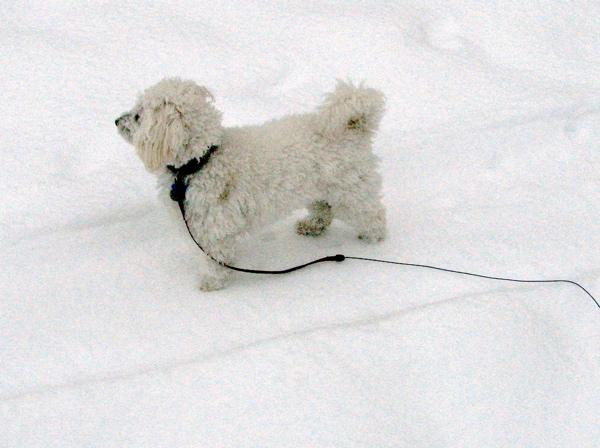 snowyneedsabath.jpg