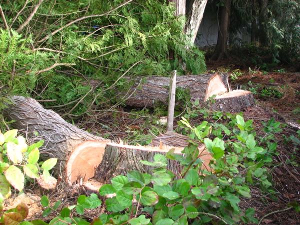downed-trees.jpg