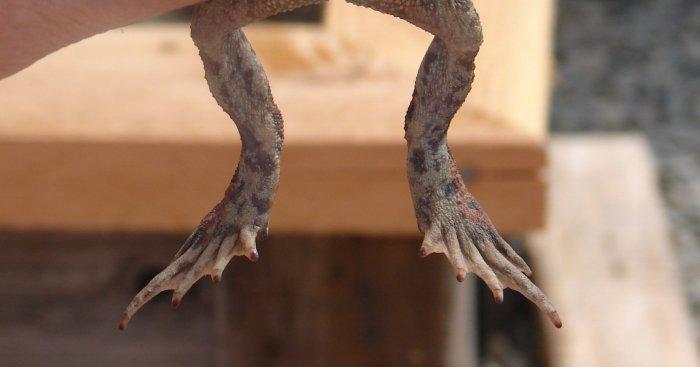 frogfeet.jpg
