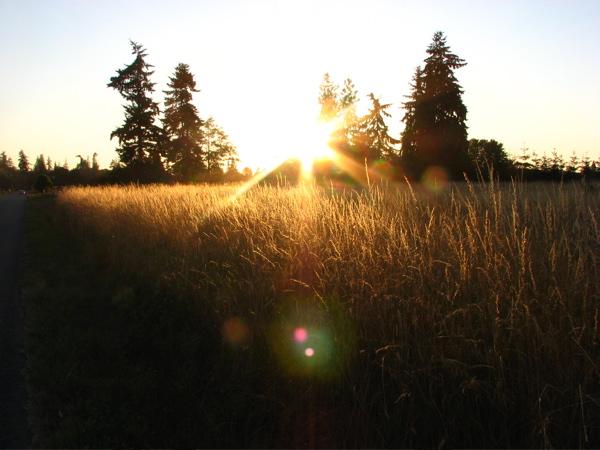 golden-grain.jpg