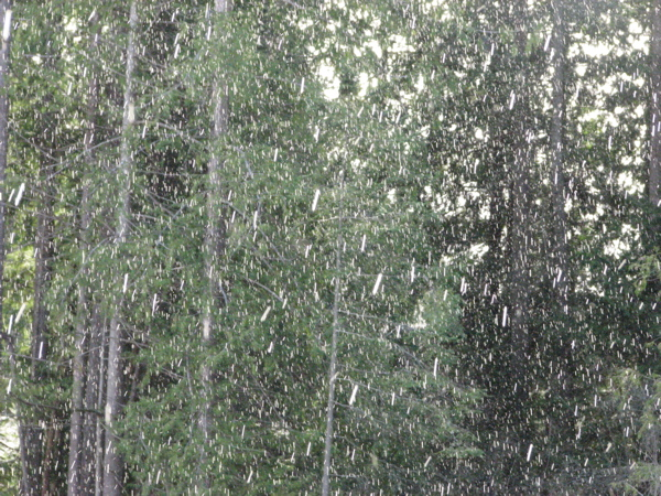 chuncky-rain.jpg