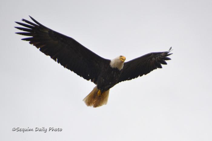 Eagle face 2